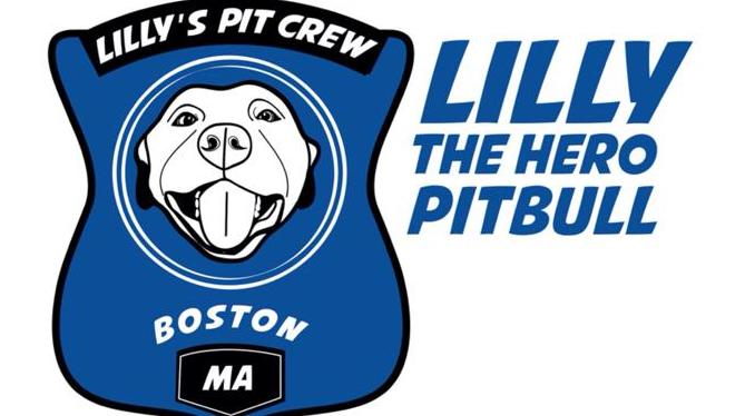 Lilly the Hero Pit Bull